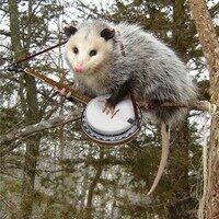 Profile image for punk opossum