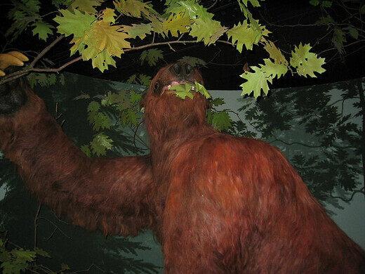Giant sloth recreation