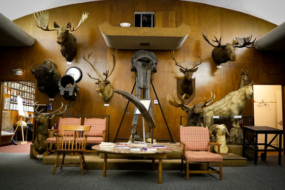 Mammoth skull donated to the Adventurer's Club in 1925 by club member Joseph Chilberg