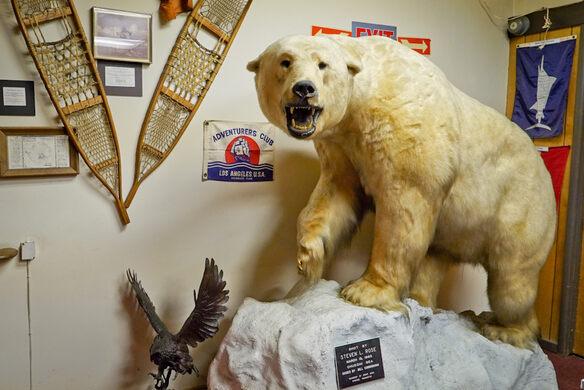 Polar Bear donated by Steven L. Rose