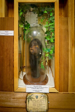 Shrunken head from Bororo tribe on the Mamone River in Brazil, donated by club member Dr. Strube
