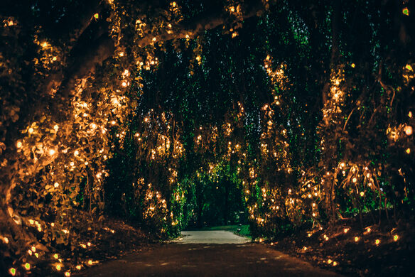 The night garden of serenissima a venetian fairy tale atlas obscura for A night at the garden