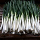 Calcots are longer than your average onion.