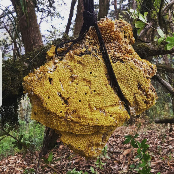 A hive in Lamjung, Nepal, likely of bees that can make mad honey.
