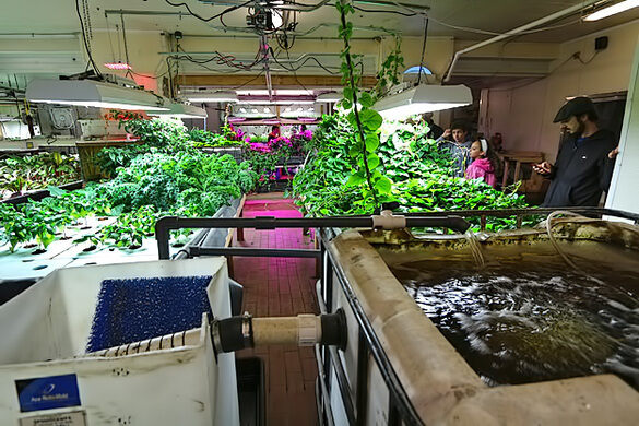The aquaponic farm