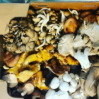 Box of locally foraged wild mushrooms