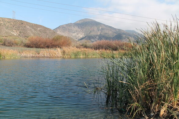 Lost Lake, a small sag pond on the San Andreas Fault.