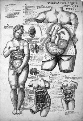 Anatomical sketches after Valverde; female anatomy.