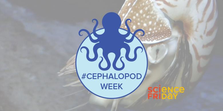 #CephalopodWeek