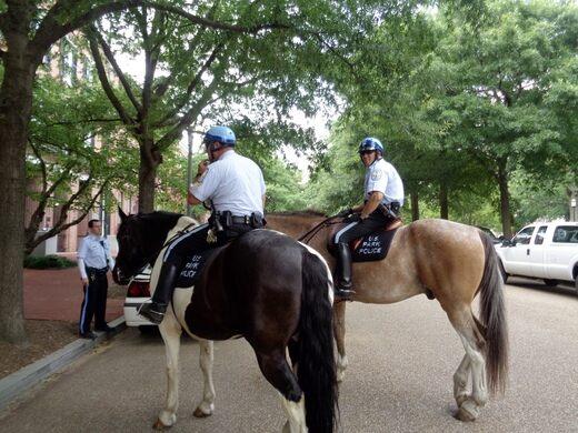 Police horses in Lafayette Square.