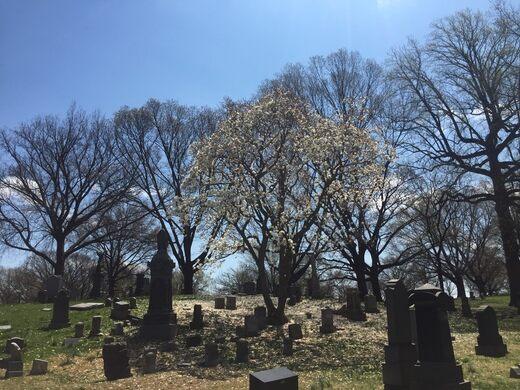 The Evergreens Cemetery.