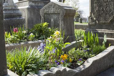 Cradle Grave Garden.