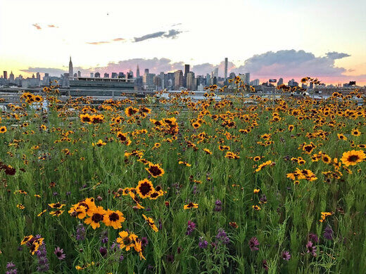 Sunset at Kingsland Wildflowers.