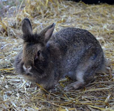 Bella the bunny.