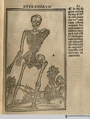 Berengario's Isagogae Breves (1530).