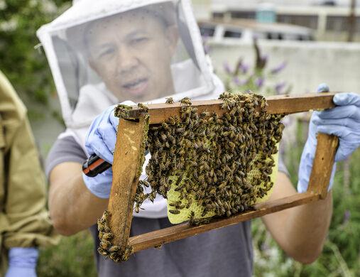 Urban Beekeeping 101