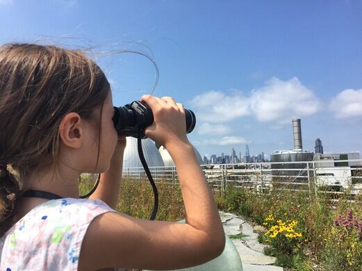 Birding on the rooftop.