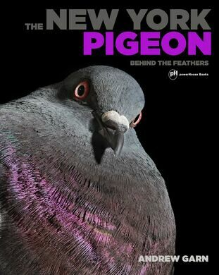 The New York Pigeon: Behind the Feathers.