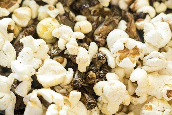 Cricket popcorn.