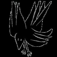 Profile image for Shiv