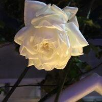 Profile image for tagurit381