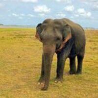 Profile image for srilanka