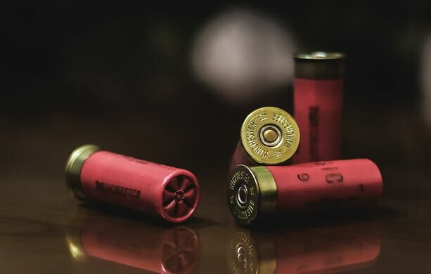 Red and gold shotgun shells.