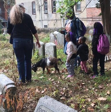 Philly Goat Project at Lower Hood Cemetery