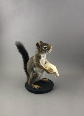 Momento Mori Squirrel.