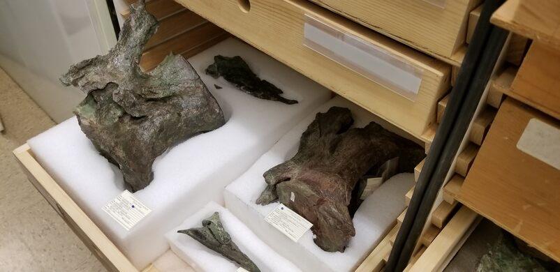 Dino Lab Samples.