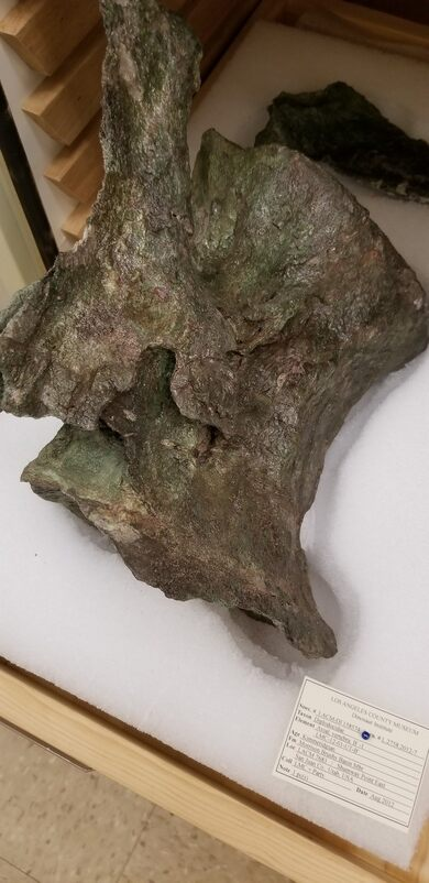 Fossil in the DIno Lab