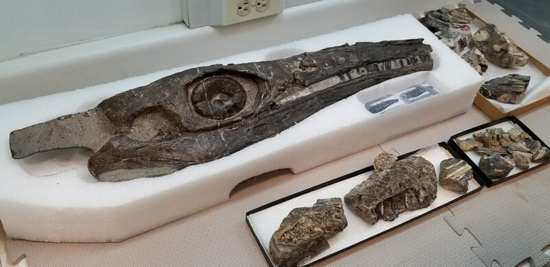Hidden treasures in the Dino Lab