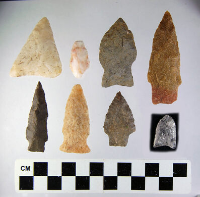 Stone projectile points from the Katcef site, near Polly Place. The varieties of projectiles points show repeated visits to Katcef from 13,000-1,000 years ago.