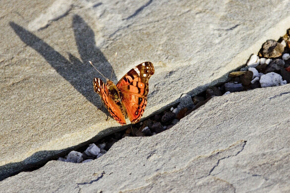 The butterflies are abundant on the rooftop.