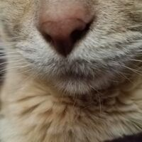 Profile image for Catmint