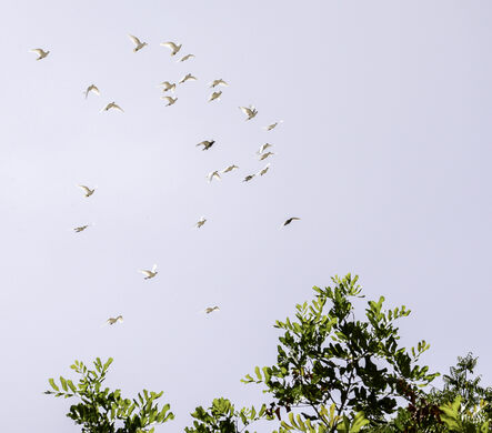 Released doves circling overhead.