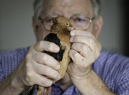 Drew Lobenstein holding a fancy pigeon.