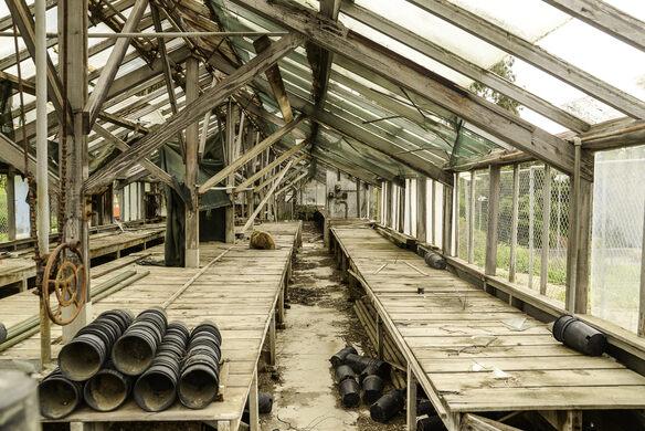 Abandoned greenhouse.