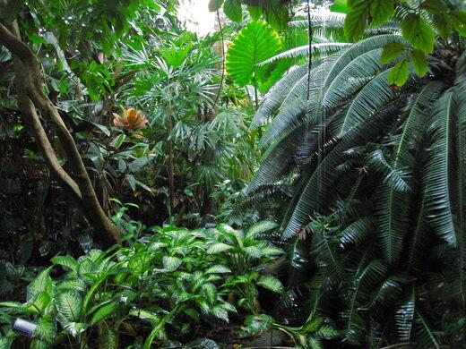 Brooklyn Botanic Garden's Tropical Pavilion.