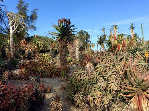 Desert Garden at the UCLA Botanic Garden.
