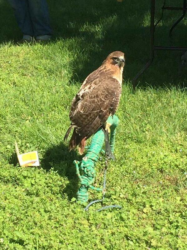 A raptor eyeing prey.