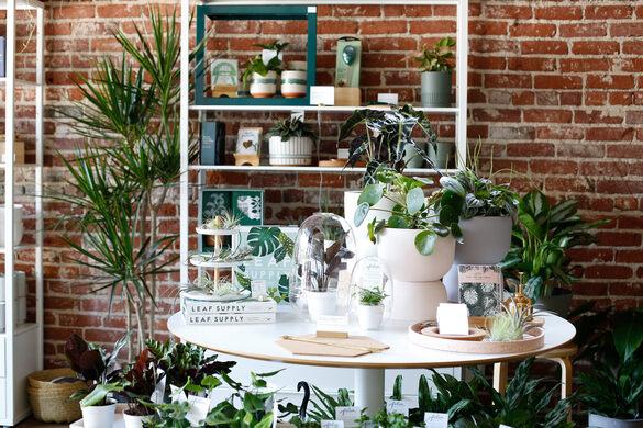 Folia Collective shop.