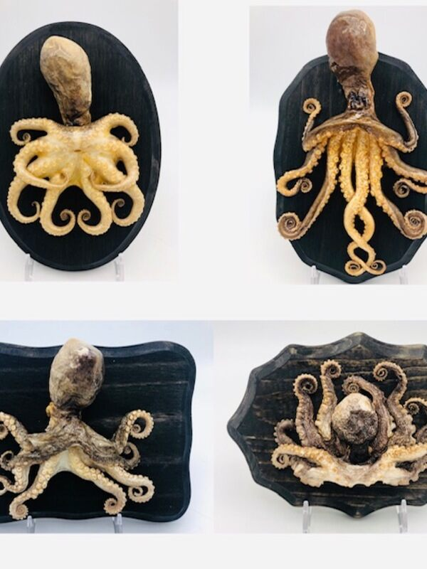 Samples of octopus taxidermy.