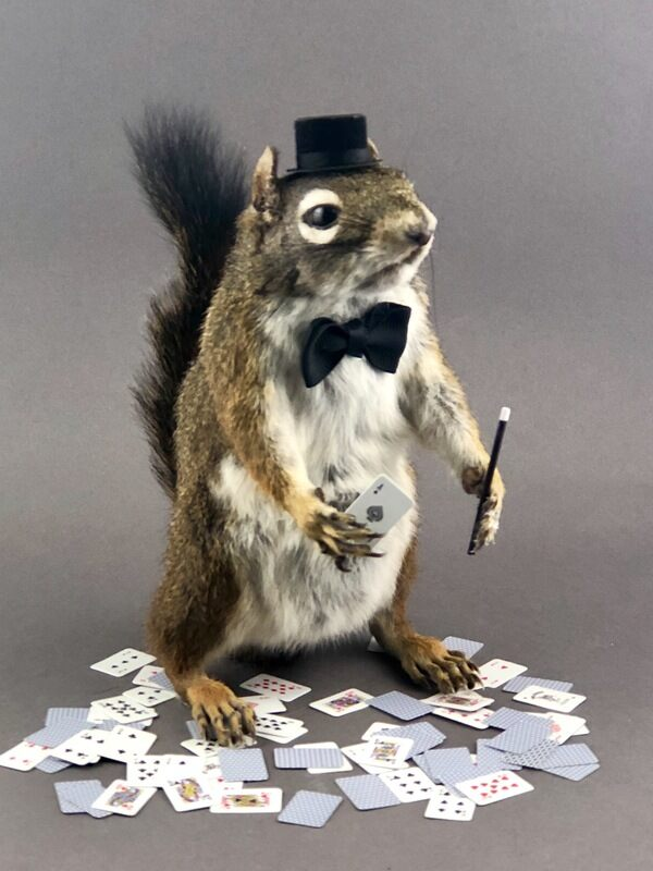 The Squirrel astounds the audience.