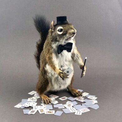 Magician squirrel taxidermy.
