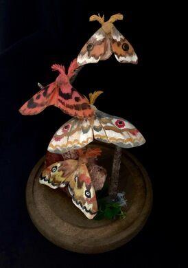 Wax moth workshop.