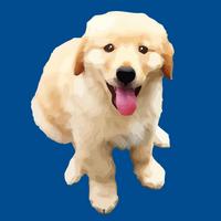 Profile image for AlfrescoDog