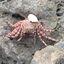 CoolestCrab