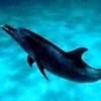 Profile image for banglindhardt46fyebsy