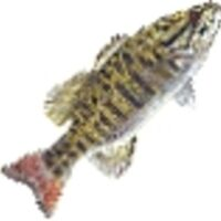 Profile image for ricekearney27ddlcza